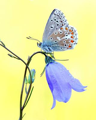 Butterfly on Bell Flower - Obrázkek zdarma pro 128x160