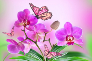 Orchids Picture for Android, iPhone and iPad