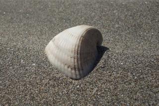 Seashell And Sand - Obrázkek zdarma pro 1280x1024