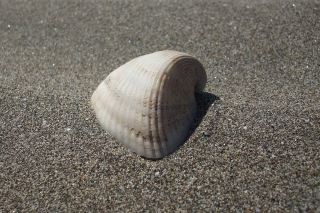 Seashell And Sand - Obrázkek zdarma pro Android 1440x1280