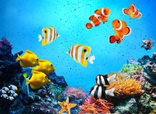 Обои Tropical Fishes на Android