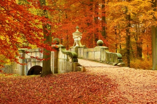 Autumn in Peterhof Background for Android, iPhone and iPad