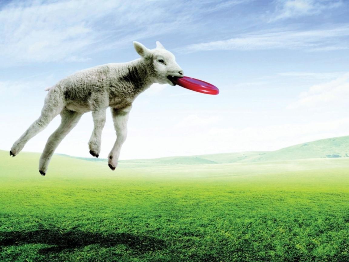 Screenshot №1 pro téma Lamb And Frisby 1152x864
