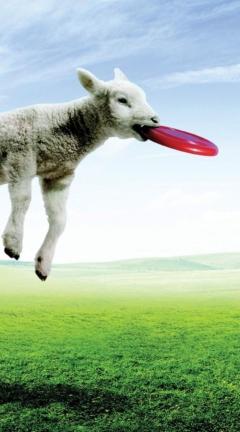 Screenshot №1 pro téma Lamb And Frisby 240x432