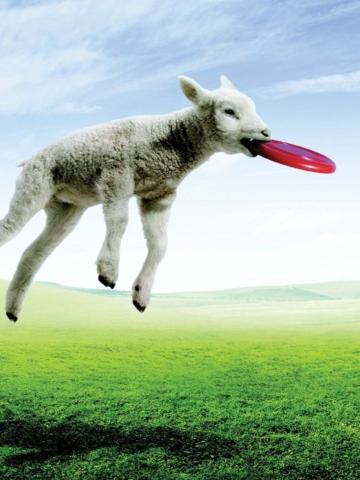 Screenshot №1 pro téma Lamb And Frisby 360x480