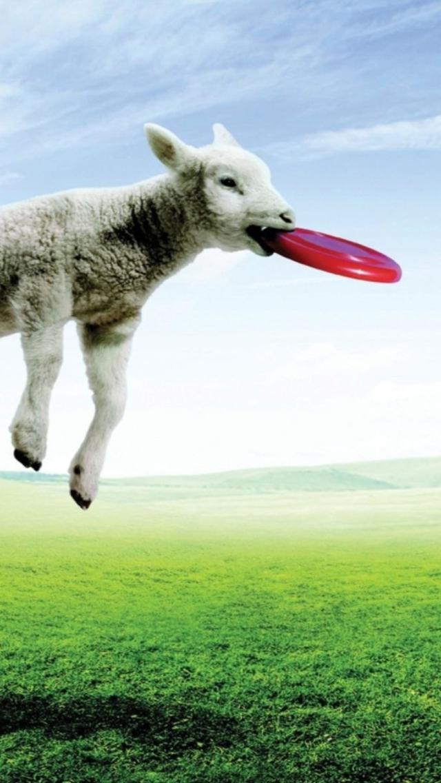 Screenshot №1 pro téma Lamb And Frisby 640x1136