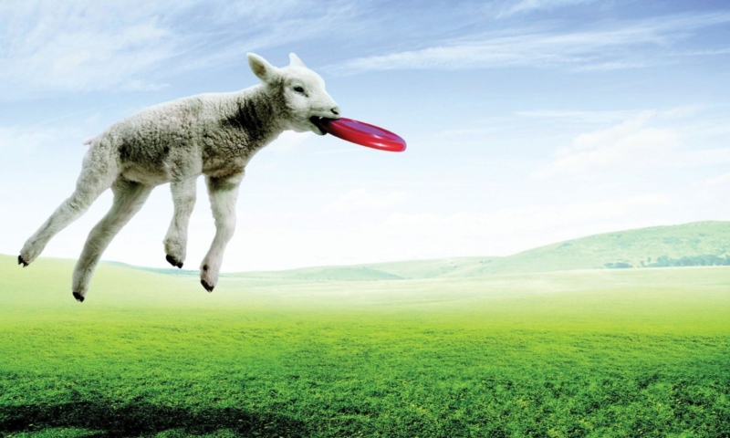 Screenshot №1 pro téma Lamb And Frisby 800x480