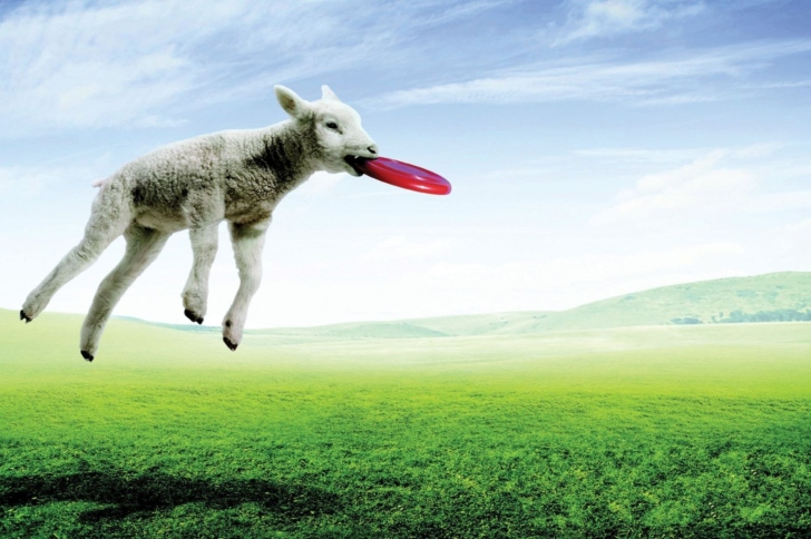 Screenshot №1 pro téma Lamb And Frisby
