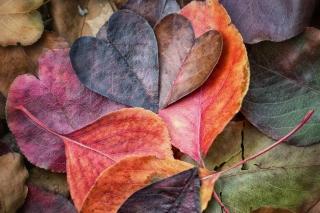 I Love Autumn - Fondos de pantalla gratis para Nokia X2-01