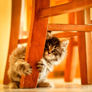 Baby Kitten - Obrázkek zdarma pro 1024x1024