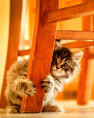 Baby Kitten - Obrázkek zdarma pro 352x416