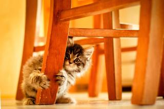 Baby Kitten - Obrázkek zdarma pro Desktop 1280x720 HDTV