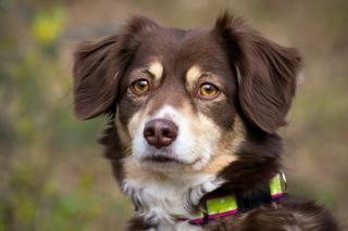 Nice Dog Muzzle - Obrázkek zdarma pro 1280x1024