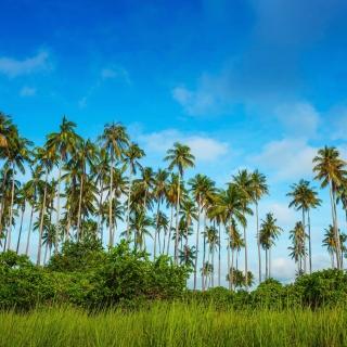 Malaysia, Bohey Dulang Island - Obrázkek zdarma pro 208x208