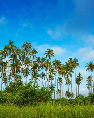Malaysia, Bohey Dulang Island - Obrázkek zdarma pro 128x160