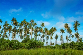 Malaysia, Bohey Dulang Island - Obrázkek zdarma pro HTC Wildfire