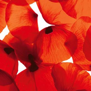 Poppy Petals - Obrázkek zdarma pro 208x208