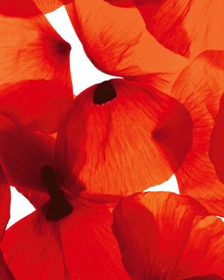 Poppy Petals - Obrázkek zdarma pro 320x480