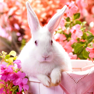Cute Rabbit - Obrázkek zdarma pro 208x208