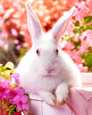 Cute Rabbit - Obrázkek zdarma pro 360x400