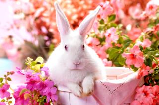 Cute Rabbit - Obrázkek zdarma pro Nokia Asha 200