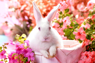 Cute Rabbit - Obrázkek zdarma pro Samsung Galaxy S3