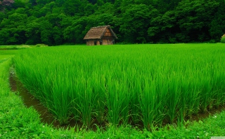 House In Fields Of Green Wallpaper for Android, iPhone and iPad