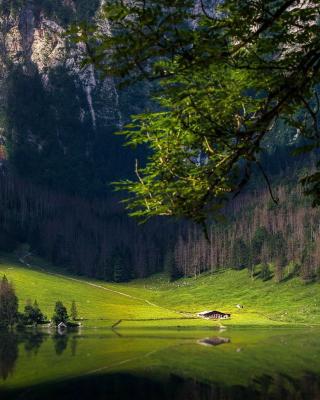 Bavarian Alps and Forest - Obrázkek zdarma pro Nokia Asha 309