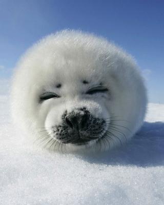 White Seal - Obrázkek zdarma pro Nokia C2-03