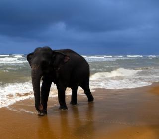 Elephant On Beach - Obrázkek zdarma pro iPad mini