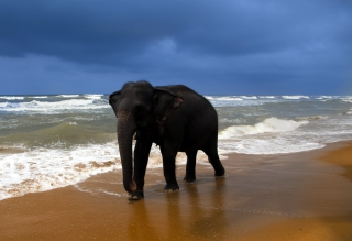 Elephant On Beach - Obrázkek zdarma pro Widescreen Desktop PC 1920x1080 Full HD