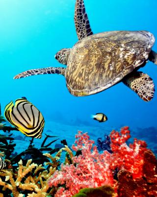 Caribbean Sea Turtle - Obrázkek zdarma pro 176x220
