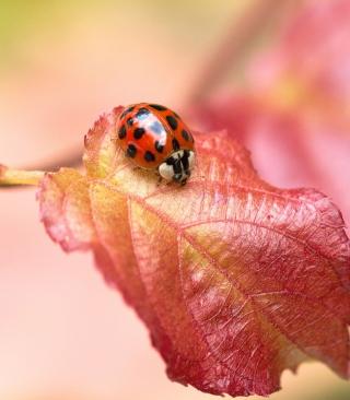 Ladybug On Red Leaf - Obrázkek zdarma pro Nokia C1-02