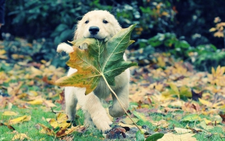 Dog And Leaf Picture for Android, iPhone and iPad