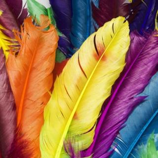 Colorful Feathers - Obrázkek zdarma pro iPad mini 2