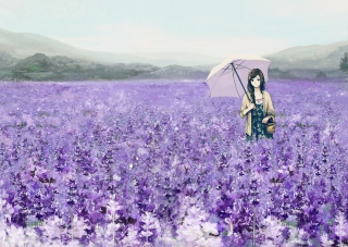 Girl With Umbrella In Lavender Field - Obrázkek zdarma