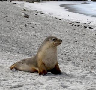Seal Beach - Obrázkek zdarma pro 2048x2048