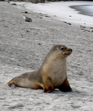 Seal Beach - Obrázkek zdarma pro Nokia Lumia 610