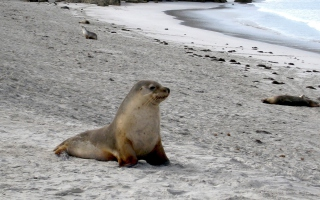Seal Beach - Obrázkek zdarma pro Sony Xperia Z3 Compact
