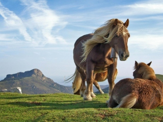 Free Mountain Horses Picture for Android, iPhone and iPad