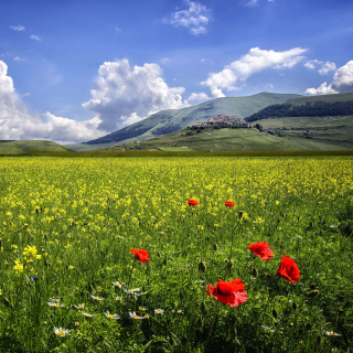Poppy Meadow HDR - Obrázkek zdarma pro iPad Air