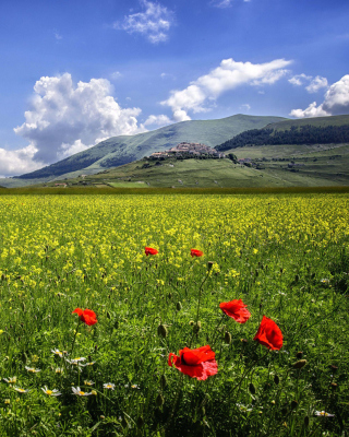 Poppy Meadow HDR - Obrázkek zdarma pro iPhone 4S