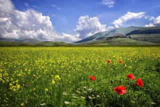 Poppy Meadow HDR - Obrázkek zdarma pro Motorola DROID