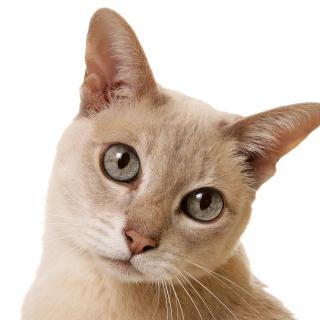Cat Selfie - Obrázkek zdarma pro iPad