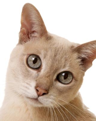 Cat Selfie - Obrázkek zdarma pro Nokia Asha 503
