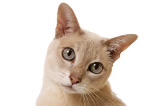 Cat Selfie - Obrázkek zdarma pro HTC Hero