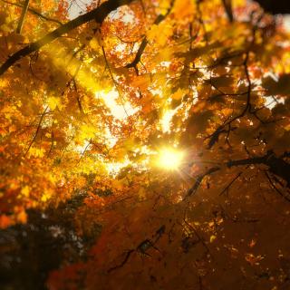 Autumn Sunlight and Trees - Obrázkek zdarma pro iPad