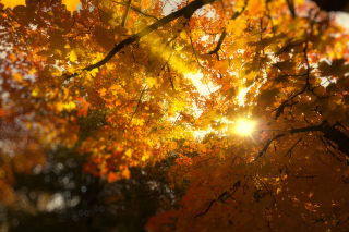 Autumn Sunlight and Trees Wallpaper for Android, iPhone and iPad