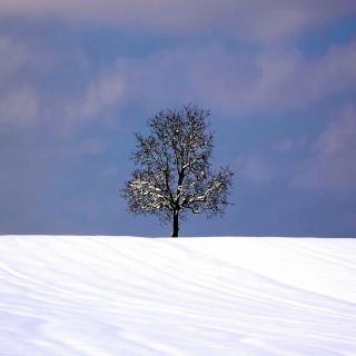 Tree And Snow - Obrázkek zdarma pro iPad 2