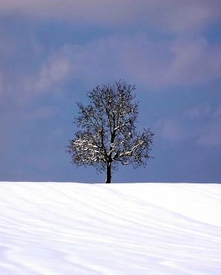 Tree And Snow - Obrázkek zdarma pro Nokia Asha 308